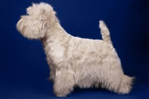 West Nest Impish Boy